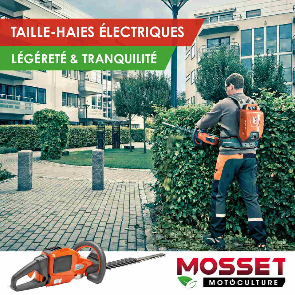 MOSSET TAILLE HAIE id C3 A9e 2